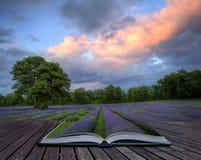 Creatief conceptenbeeld van lavendellandschap stock fotografie