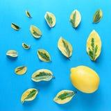 Creatief die de zomerpatroon van citroen en groene bladeren wordt gemaakt Royalty-vrije Stock Afbeelding