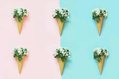 Creatief stilleven van witte de lentebloem in wafelkegel op roze en blauw Het concept van de lente Hoogste mening stock foto's