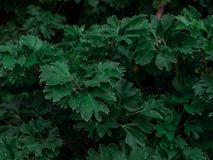 Creatieve aardlay-out met donker gestemd groen bladerenpatroon De achtergrond stelt voor manier, schoonheid, levensstijlaffiches  royalty-vrije stock fotografie