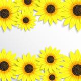 Creatieve achtergrond met zonnebloemen Royalty-vrije Stock Foto's