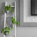 Creatieve decoratie van ladder royalty-vrije stock afbeeldingen
