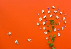 Creatieve die boom van witte bloemen op oranje achtergrond wordt gemaakt Stock Afbeeldingen