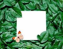 Creatieve die lay-out van bladeren met document kaartnota wordt gemaakt Vlak leg Het concept van de aard royalty-vrije stock afbeelding