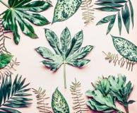 Creatieve die lay-out van diverse tropische palm en varenbladeren wordt gemaakt Uitheemse gewassen op pastelkleur roze achtergron royalty-vrije stock fotografie
