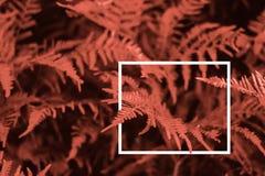 Creatieve lay-out die van bladeren a met een wit getrokken kader wordt gemaakt Kleur van het jaar 2019 De achtergrond van de aard royalty-vrije stock afbeeldingen