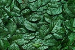 Creatieve lay-out die van bladeren wordt gemaakt Vlak leg Het concept van de aard Royalty-vrije Stock Foto's
