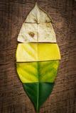 Creatieve lay-out van kleurrijke de herfstbladeren Stock Fotografie
