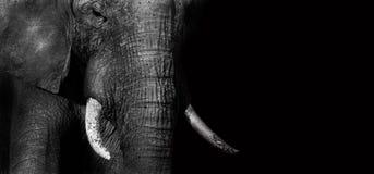 Creatieve olifant (geef uit) Royalty-vrije Stock Afbeeldingen