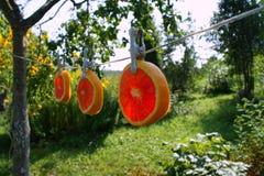 Creatieve sinaasappel Stock Afbeeldingen