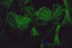 Creatieve tropische groene bladeren stock foto's