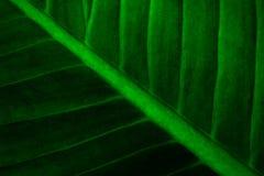 Creatieve tropische groene bladeren stock foto