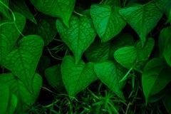 Creatieve tropische groene bladeren stock afbeeldingen