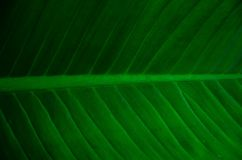 Creatieve tropische groene bladeren royalty-vrije stock afbeeldingen