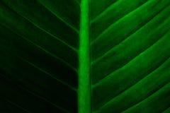 Creatieve tropische groene bladeren stock fotografie