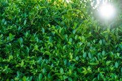 Creatieve tropische groene bladeren royalty-vrije stock afbeelding