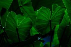 Creatieve tropische groene bladeren royalty-vrije stock foto's