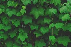 Creatieve tropische groene bladeren royalty-vrije stock foto