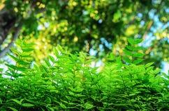 Creatieve tropische groene bladeren stock afbeelding
