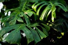 Creatieve tropische groene bladerenlay-out Het concept van de aardlente Vlak leg Achtergrond stock foto's