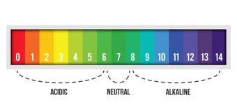 Creatieve vectordieillustratie van pH schaalwaarde op achtergrond wordt geïsoleerd Chemisch infographic kunstontwerp Abstract con vector illustratie