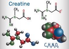 Creatinemolecule Structurele chemische formule en moleculewijze Stock Fotografie