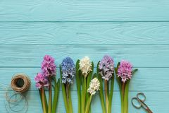 Creating a beautiful bouquet of hyacinths in pink, blue, white, violet colors on the blue wooden background royalty free stock photos