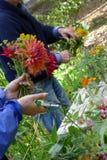 Creating a Dahlia bouquet Stock Photos