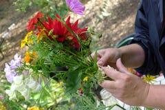 Creating a Dahlia bouquet Stock Photo