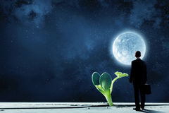 Creating new life. Businessman standing with back and green growing sprout stock photo