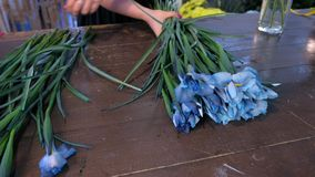 Florist woman making bouquet from blue iris flowers on table for sale in shop. stock video