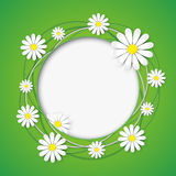 Creative abstract background with chamomile flower. Creative abstract green background with chamomile flower. Floral ornamental frame. Vector illustration Royalty Free Stock Images