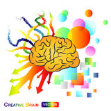 Creative / Abstract Brain. The Creative / Abstract Brain colorful Stock Photography