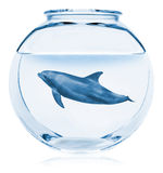 Creative Aquarium. Dolphin Stock Photos