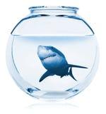 Creative Aquarium. Shark Royalty Free Stock Photo
