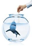 Creative Aquarium. Tamed Shark Royalty Free Stock Photography