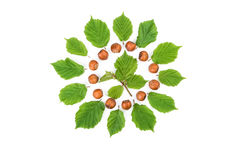 Creative arrangement of filbert nuts with leaves on white. Flat lay, top view Stock Photography