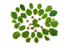 Creative arrangement of filbert nuts with leaves on white. Flat lay, top view. Creative arrangement of filbert nuts with leaves on white. Flat lay, top view Stock Images