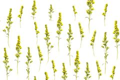 Creative arrangement of yellow autumn flowers on white background. Flat lay, top view Stock Images