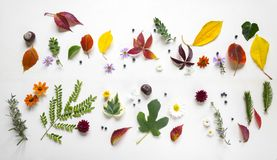 Creative arrangment made of autumn leaves.  Royalty Free Stock Photography