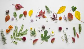 Creative arrangment made of autumn leaves.  Stock Photography