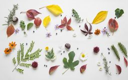 Creative arrangment made of autumn leaves.  Royalty Free Stock Photo