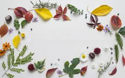 Creative arrangment made of autumn leaves.  Royalty Free Stock Images