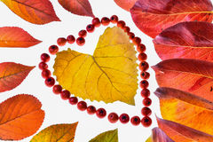 Creative autumn leaves Stock Photography