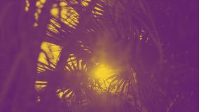 Creative background banner, tropical palm leaf with bokeh sun light abstract background. Yellow and ultra violet duotone. Contrast. Creative modern banner royalty free stock photo