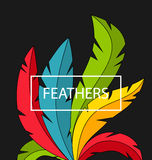 Creative Background with Colorful Feathers Stock Image