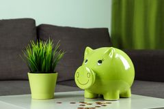 Creative background, green pig money box on gray background. The concept of saving money, savings, pig piggy, family budget, copy stock photos