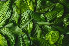 Creative background made green leaves royalty free stock images
