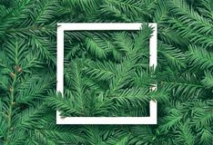 Creative background of pine branch with white paper frame. New Year and Merry Christmas Concept. Flat Lay Stock Image