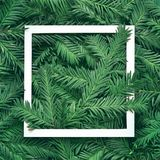 Creative background of pine branch with white paper frame. New Year and Merry Christmas Concept. Flat Lay Royalty Free Stock Photo